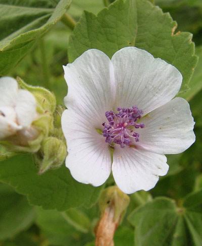 herbal kidney stone