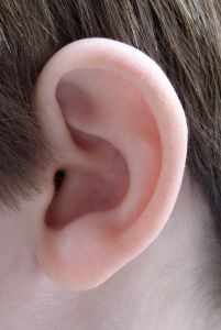 herbal remedies for ear infections